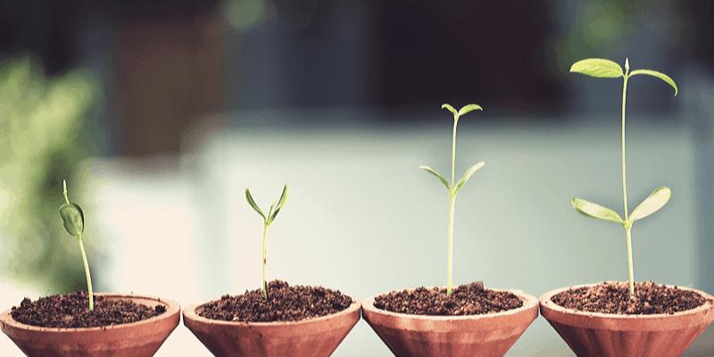 plants representing growing of savings